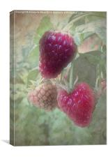 Raspberries, Canvas Print