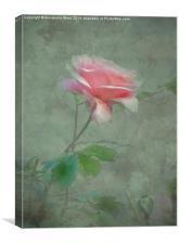 Rose Pink, Canvas Print