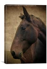 Horse Portrait, Canvas Print