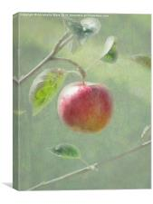 Apple of my Eye., Canvas Print