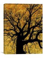 Oak tree in yellow., Canvas Print