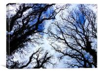 Winter Tree Tops, Canvas Print