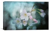 Spring Blossom., Canvas Print