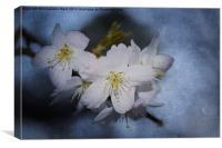 Springtime Blossom., Canvas Print