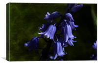 Spring Bluebells, Canvas Print