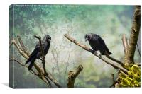 Jackdaw Love, Canvas Print