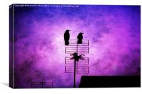 Two Crow Violet, Canvas Print