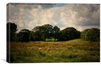 Arreton Countryside., Canvas Print