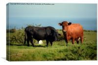 Bullock and Cow., Canvas Print