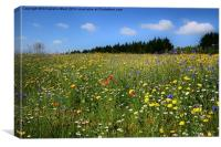Wild Flowers Meadow, Canvas Print