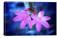 Pink Flowers on Blue., Canvas Print