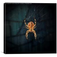 Spider on Web., Canvas Print