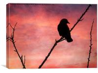 Jackdaw Sunset., Canvas Print