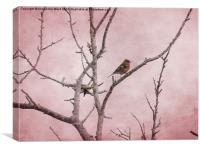 Chaffinch and Pink Sky., Canvas Print
