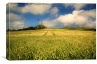 Fields of Barley., Canvas Print