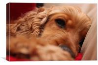Sleeping Dog, Canvas Print