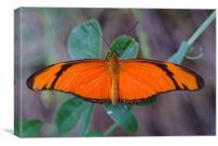 Orange Butterfly, Canvas Print