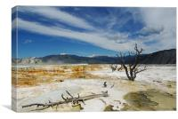 Dry trees, Yellowstone, Canvas Print