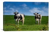 Springtime Dairy Cows, Canvas Print