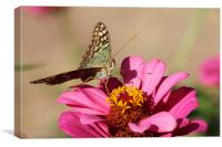Butterfly on a pink flower, Canvas Print