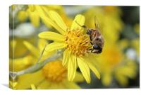Bee on a yellow flower, Canvas Print