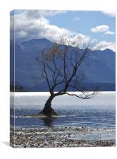 Solitary Tree, Canvas Print