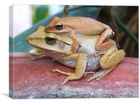 Mother And Baby Frogs, Canvas Print