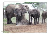 Elephant Family Dust Bath, Canvas Print