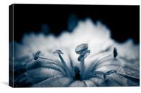 Petals and Stamens, Canvas Print