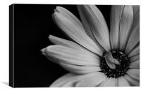 Flower B/W version, Canvas Print