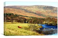 Highland cow in Glen Lyon, Canvas Print