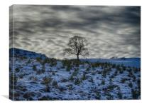 Winter sky, lone tree on a hill, Canvas Print