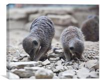 Two Meerkats, Canvas Print