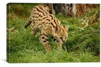 Serval Kitten Pouncing, Canvas Print