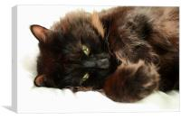 Cat Posing, Canvas Print