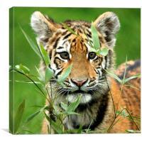 Amur Tiger Cub Hiding, Canvas Print