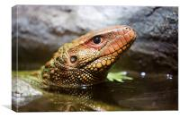 Northern caiman lizard, Canvas Print