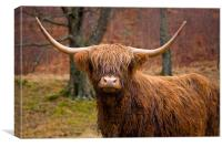 Highland Cow in Field, Canvas Print