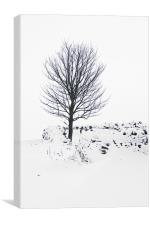 Silent Winter, Canvas Print