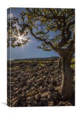 Tree at Twistleton Scars, Canvas Print