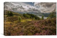 Heather Blooms in the Lake District, Canvas Print