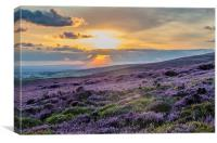 Purple Heather Sunset looking across to Manchester, Canvas Print