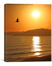 Flying into Sunset , Canvas Print