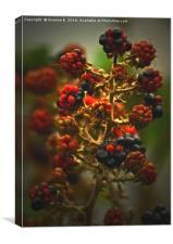 Blackberries, Canvas Print