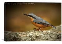 Nuthatch 5, Canvas Print