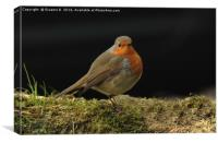 Hennock Robin, Canvas Print
