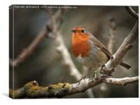 Sweet Robin, Canvas Print