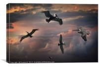 Pelican Sky, Canvas Print