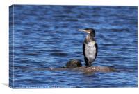 Lonely Cormorant, Canvas Print