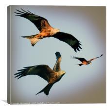Triple Red Kite, Canvas Print